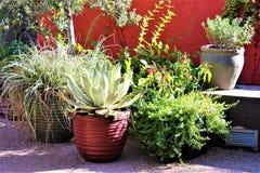 沙漠植物园菲尼斯亚利桑那 免版税库存图片