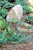 沙漠植物园菲尼斯亚利桑那 免版税库存照片