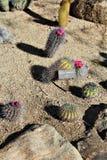 沙漠植物园菲尼斯亚利桑那 图库摄影