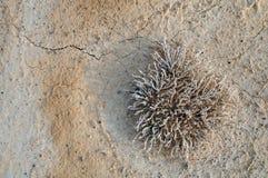 沙漠植物的顶视图 免版税库存照片