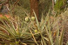 沙漠植物群夏令时 免版税库存照片