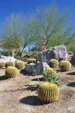 沙漠植物群 库存照片