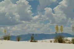 沙漠植物群 库存图片