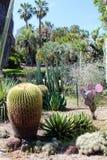 沙漠植物群 免版税库存图片