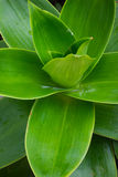 沙漠植物 免版税库存图片
