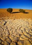 沙漠楼层 库存图片