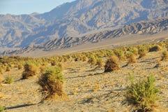 沙漠横向植被 库存图片