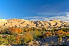 沙漠横向 免版税库存照片