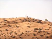 沙漠横向 库存图片