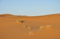 沙漠沙丘撒哈拉大沙漠沙子 图库摄影