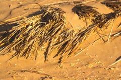 沙漠沙子样式纹理 免版税库存图片