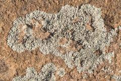沙漠油漆 免版税库存照片