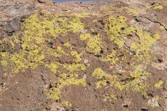 沙漠油漆 图库摄影