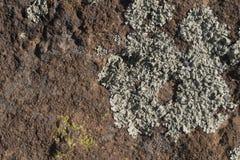 沙漠海藻例子 库存照片