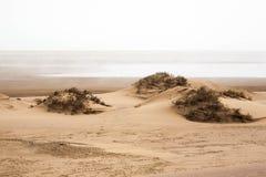 沙漠海滩 免版税图库摄影