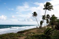 沙漠海滩 免版税库存照片
