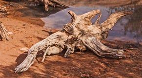 沙漠漂流木头 库存图片