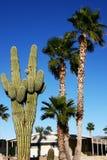 沙漠生活 免版税库存照片