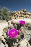沙漠生活在加利福尼亚 库存图片