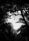 沙漠的恋人靠岸看见通过一个热带森林 图库摄影
