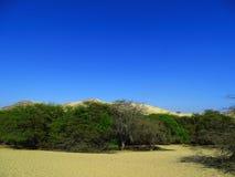 沙漠的森林 库存图片