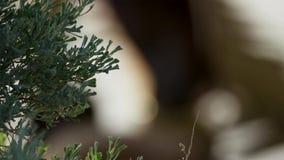沙漠的绿色植物增长的低谷沙子 库存图片