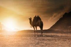 沙漠的运输 免版税图库摄影