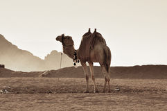 沙漠的运输 免版税库存图片