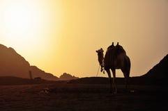 沙漠的运输 免版税库存照片
