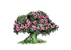 沙漠的Adenium玫瑰 库存照片
