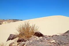 沙漠秀丽  图库摄影