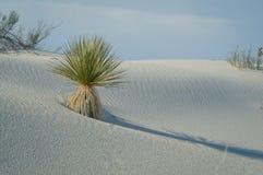沙漠秀丽 库存图片