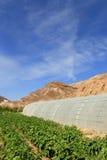 沙漠种田 库存照片