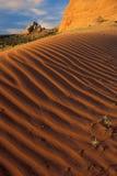 沙漠红色沙子 免版税库存图片