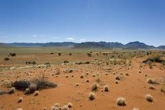 沙漠纳米比亚 库存图片