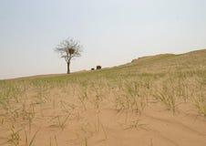沙漠结构树 库存图片