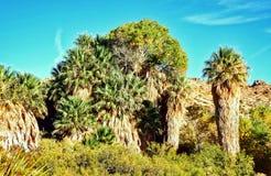 沙漠绿洲 图库摄影