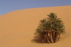 沙漠绿洲 免版税库存图片