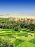 沙漠肥沃绿洲 库存图片