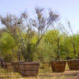 沙漠苗圃结构树 库存图片