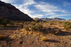 沙漠莫哈韦沙漠 免版税库存图片