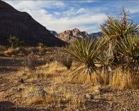 沙漠莫哈韦沙漠 库存图片