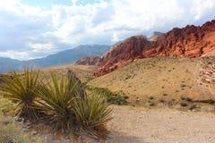 沙漠足迹和红色岩石 免版税库存照片