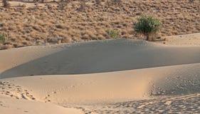 沙漠边缘沙子沙丘前景灌木背景 免版税库存图片