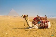 沙漠运输 库存图片