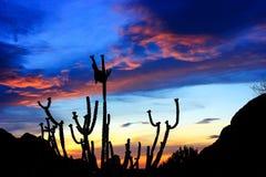 沙漠迪拜沙丘日落 图库摄影