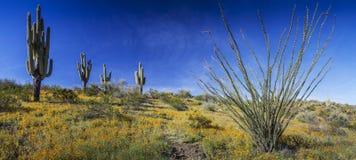 沙漠野花、柱仙人掌仙人掌和蜡烛木全景在Arizo 免版税库存图片