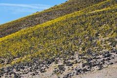 沙漠金子 库存图片
