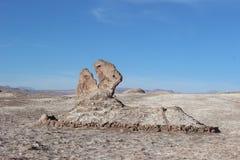 沙漠阿塔卡马恐龙 免版税库存照片