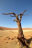 沙漠隐藏的namib纳米比亚vlei 免版税库存照片
